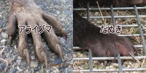 アライグマ・タヌキの足