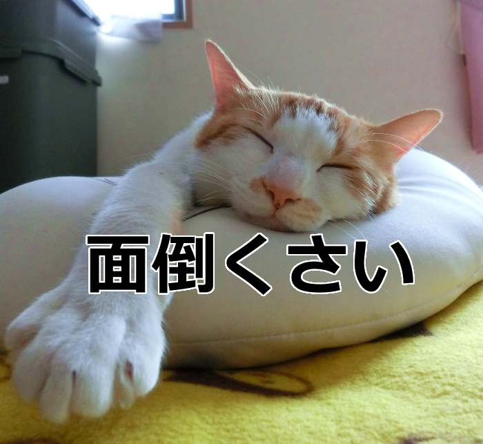 面倒くさがりの猫