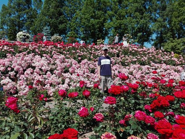 バラの中に立つ男