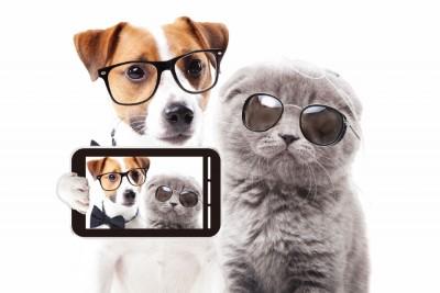 メガネをかけた犬と猫