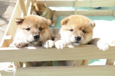 二匹の子犬