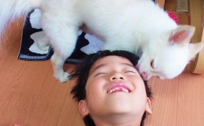 犬が子供の顔をなめている