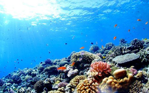 綺麗なサンゴ礁