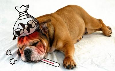 熱がある犬