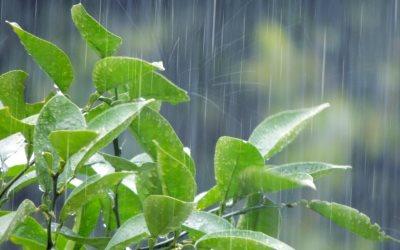 梅雨の雨に濡れる木
