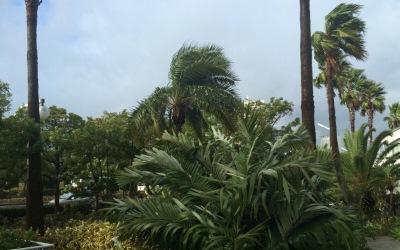 台風で揺れる木
